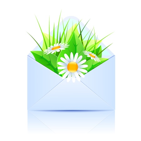Bouquet of daisies and plants in an open envelope blue  Vector illustration Vector