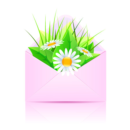 Bouquet of daisies and plants in an open envelope pink. Vector illustration Illustration