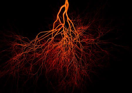 Nervous or blood system.  Medical illustration