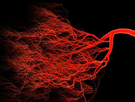 Human Nervous or blood system.  Medical and science 3d illustration