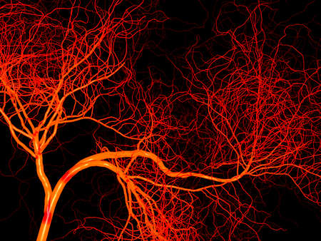 blood vessel: Nervous or blood system of artery and vein. Medical 3d illustration