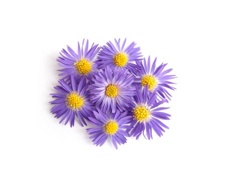 violet flowers for decoration over white background photo