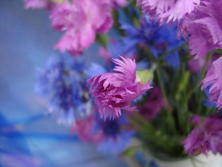 Pink carnation in blue flowered background