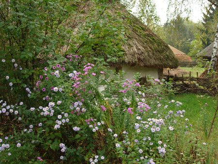 rural log-house with beautiful violet flowers Stock Photo - 653700