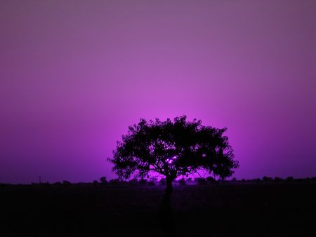 lonely tree on a field in the evening Stock Photo - 724058