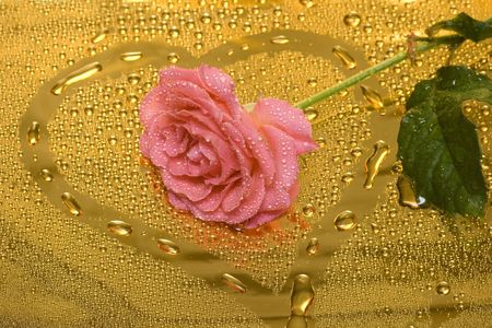 pink rose with water drops  Stock Photo - 2737677