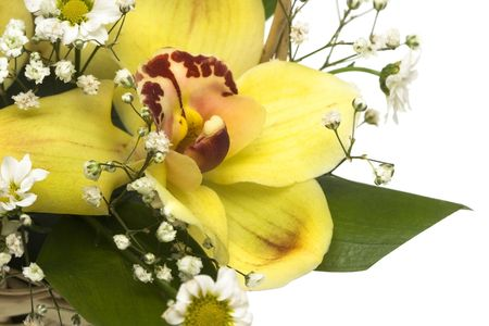 bouquet of yellow orchids in basket isolated  Stock Photo - 2782258
