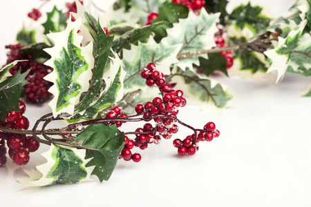 European holly on white photo