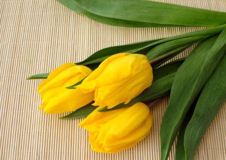 matt: three yellow tulips over straw matt  Stock Photo
