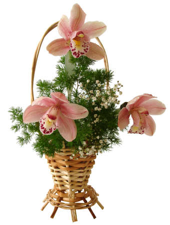 bouquet of pink orchids and white flowers in a basket isolated