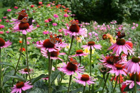 Secret garden Stock Photo