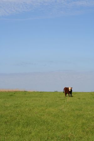 Cow on a meadow Stock Photo