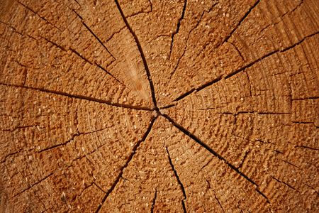 Annual growth rings and cracks on a log