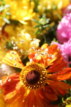 Colorful autumn bouquet Stock Photo