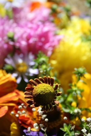 Colorful autumn flowers Stock Photo