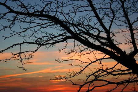 Bare tree at sunset in late autumn