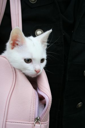 White cat in a pink bag