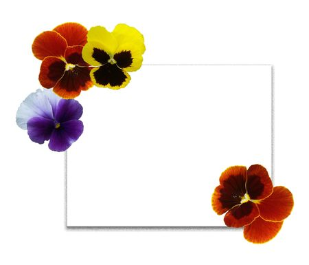 Framework and card from multi-coloured flowers of pansies