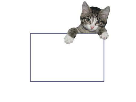 constraining: Framework with a kitten getting out because of it