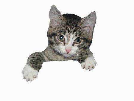 constraining: The image of a kitten which whence has got out half
