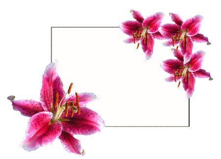 stamens: The card decorated by flowers of a lily by easter Stock Photo