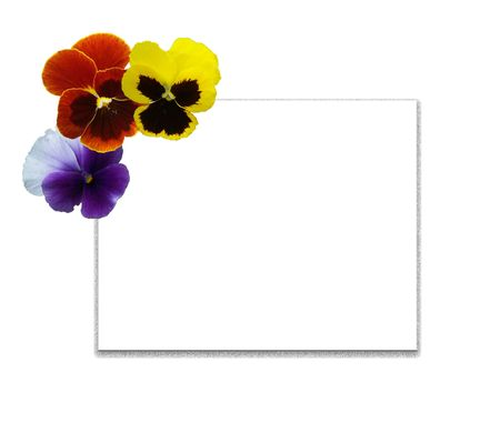 Framework and card from multi-coloured flowers of pansies Stock Photo - 864976