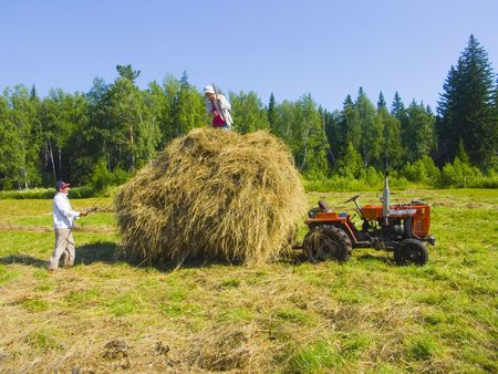The image of preparation of hay peasants in Siberia photo
