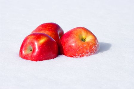 The image of red Apples in snow photo