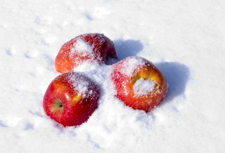 The image of apples on snow during a snowfall photo