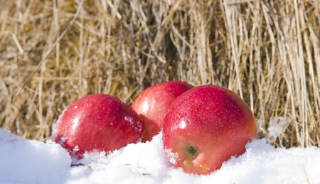 The image of Apples in snow against hay photo