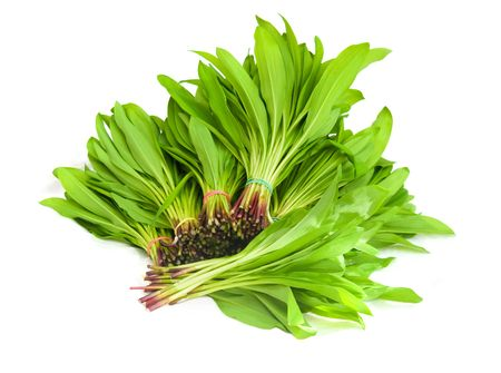 The image of a ramson fresh leaves photo