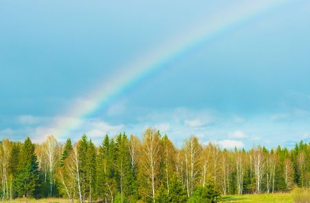 atmospheric phenomena: The image of a rainbow against the storm sky and spring wood