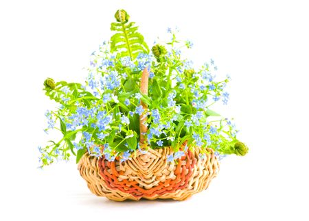The image of a bouquet of forget-me-nots in a wattled basket on a white  photo