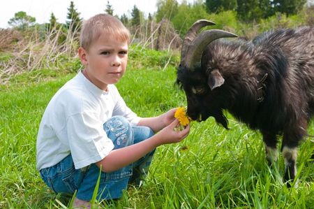 eats: The boy feeds a goat on dandelions