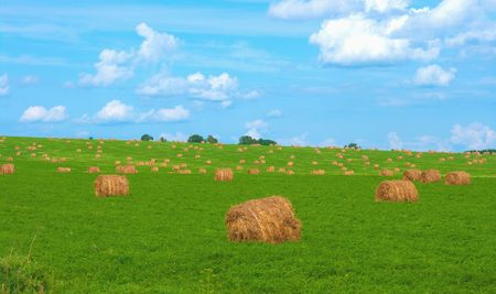 The image of oblique fields with straw bales photo