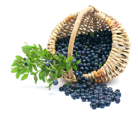 Bilberry in a basket on a white background photo