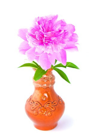 The image of peony in clay vase  photo