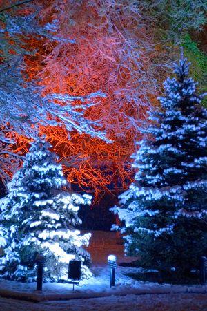 Magic Christmas tree photo