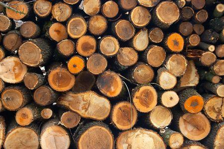 Log Pile photo