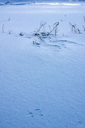 winter ice pattern Stock Photo - 358118