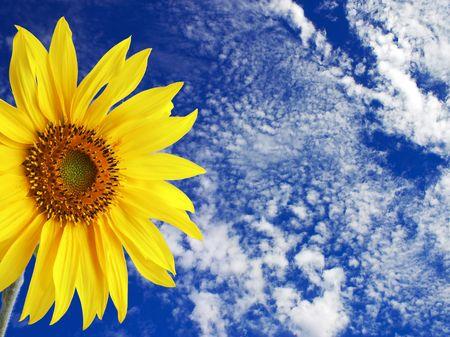 stinger: Sunflower