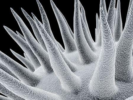3d microbios  Foto de archivo - 372175