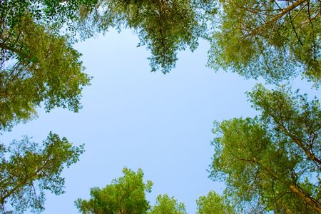 A shot looking up at the sky in forest photo