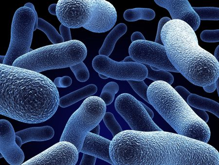 bacterias: Realista prestaci�n de bacterias - en colores rojo