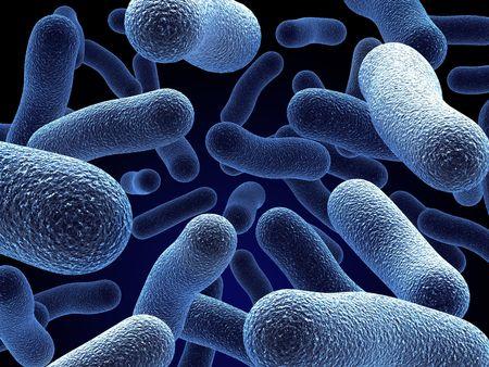 bacterie: Realistische weergave van bacteriën - in rood kleuren