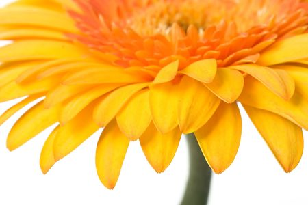 Closeup of yellow daisy on the white background Stock Photo - 678722