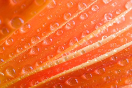 Closeup of orange daisy with water droplets Stock Photo - 745632