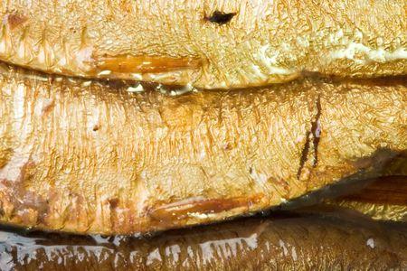 catfood: Uno conserve di pesce e di olio d'oliva