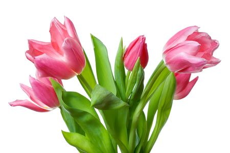 Close up of the pink tulips photo