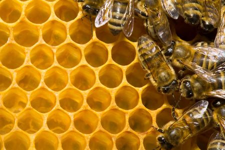 queen bee: Macro de trabajo en honeycells abeja.  Foto de archivo